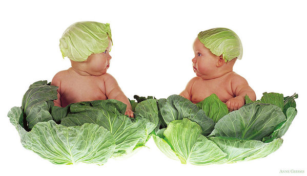 cabbage kids anne geddes